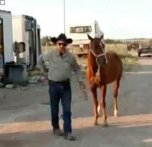 a01_jd_22mar_horse-350x340