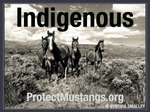 PM-Indigenous-1_001