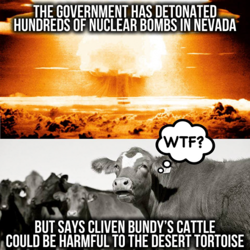 NuclearCows-590x590