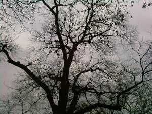 leafless_tree_by_lecorbeaugris-d4q8c6q