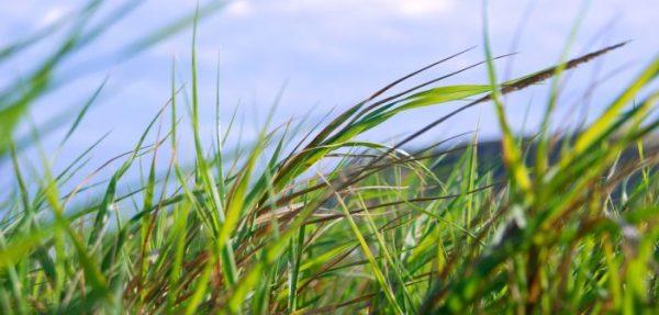 grass-web-702x336